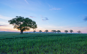 field, trees, DAWN, landscape