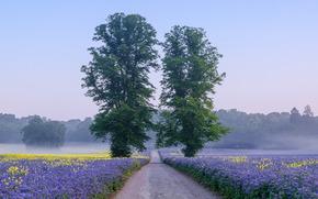 campo, stradale, alberi, nebbia, paesaggio