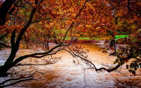fiume, autunno, alberi, natura
