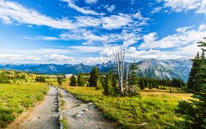 campo, stradale, Montagne, alberi, paesaggio