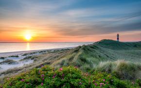 закат, море, маяк, берег, цветы, пейзаж