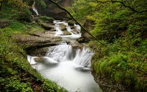 лес, деревья, водопад, река, природа