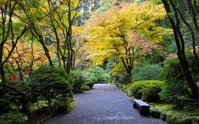 autunno, parco, giardino, alberi, stradale, paesaggio