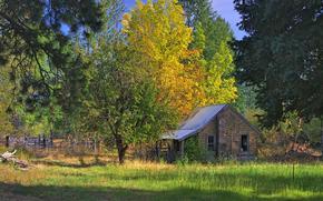 autunno, foresta, domestico, alberi, paesaggio