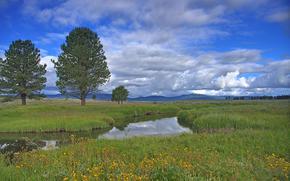 campo, fiume, alberi, paesaggio