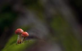 Pilze, Pilz, Macro