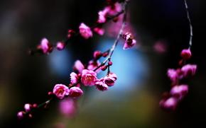BRANCHEN, Blumen, Macro