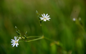 field, grass, Flowers, Macro