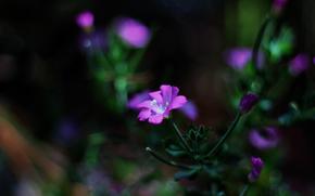 flor, planta, Macro