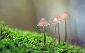 蘑菇, 蘑菇, 宏