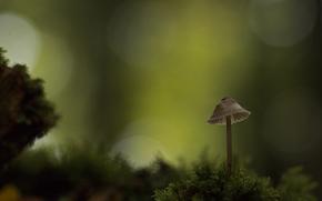 mushrooms, mushroom, Macro