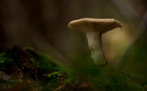 funghi, funghi, Macro