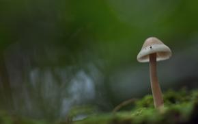 грибы, гриб, макро