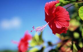 Flowers, flower, exotics, red
