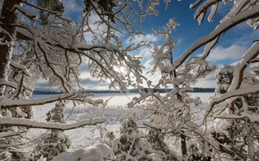 winter, snow, lake, trees, BRANCH