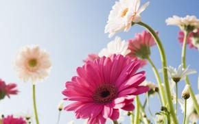 цветок, небо, солнце