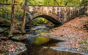 autunno, piccolo fiume, ponte, alberi, natura