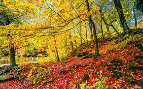autumn, hill, forest, trees, landscape