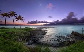 pôr do sol, mar, Palms, costa, paisagem