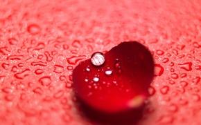 цветы, лепесток, роза, красный, капли, макро, вода, роса