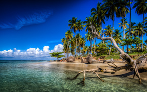 Las Terrenas, Samana, Dominican Republic, Caribbean, Atlantic Ocean, Las Terrenas, Samana, Dominican Republic, Caribbean Islands, Atlantic Ocean, coast, ocean, Palms, tropics, snag