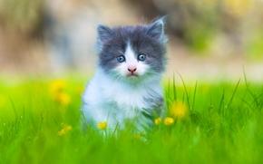 gattino, bambino, visualizzare, erba