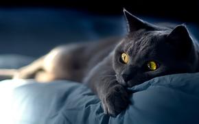 COTE, gatto, museruola, visualizzare