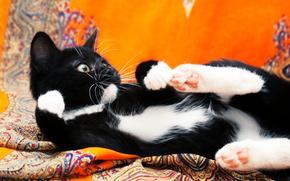 COTE, 小猫, 黑白, 猫, 猫, 小猫, PHOTOSHOOT, 背景, 橙, 布, 材料