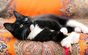 кот, котенок, черно-белый, кошка, кошки, котята, фотосессия, фон, оранжевый, ткань, материал