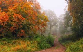 autumn, forest, fog, trees, footpath, landscape