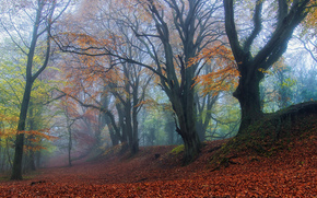autumn, forest, fog, trees, nature