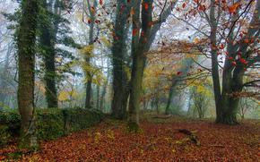осень, лес, туман, деревья, природа