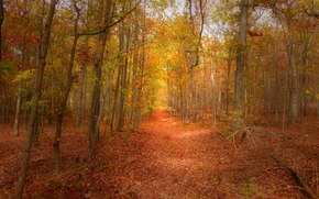 autumn, forest, trees, footpath, nature