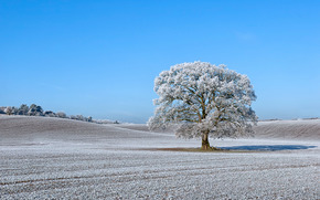 field, Hills, tree, nature