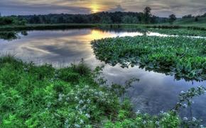 tramonto, fiume, piante, alberi, Fiori, paesaggio