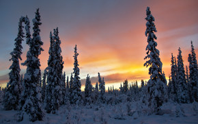 Alaska, winter, trees, sunset, landscape