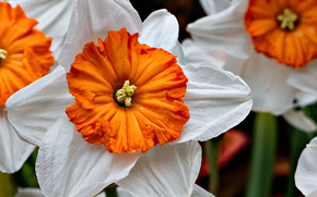 Kwiaty, kwiat, Macro, piękny kwiat, piękne kwiaty, flora