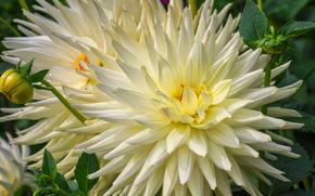 цветы, цветок, макро, красивый цветок, красивые цветы, флора