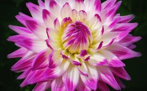 Fiori, fiore, Macro, bellissimo fiore, bellissimi fiori, flora