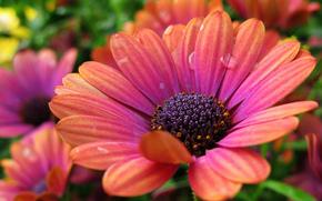 Flores, flor, Macro, bela flor, belas flores, flora