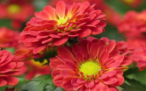 Flowers, flower, Macro, beautiful flower, beautiful flowers, flora