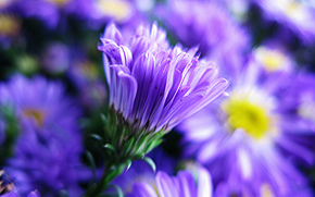 Flowers, flower, Macro, beautiful flower, beautiful flowers, flora