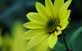Flores, flor, Macro, hermosa flor, hermosas flores, flora