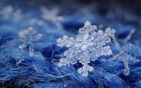 Płatki śniegu, Macro, niebieski