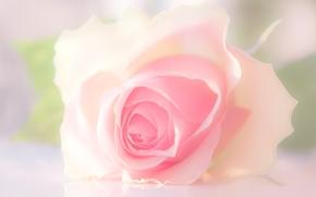 роза, бутон, лепестки, нежность, макро