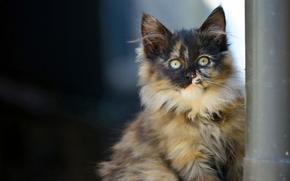 kitten, fluffy, view