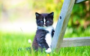 gattino, bambino, visualizzare, erba, bokeh