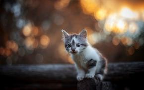 gattino, bambino, visualizzare, bokeh