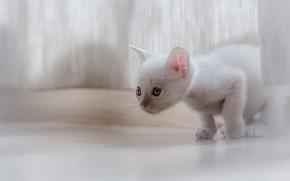 gattino bianco, gattino, bambino