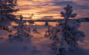 norway, Norway, winter, snow, drifts, sunset, trees